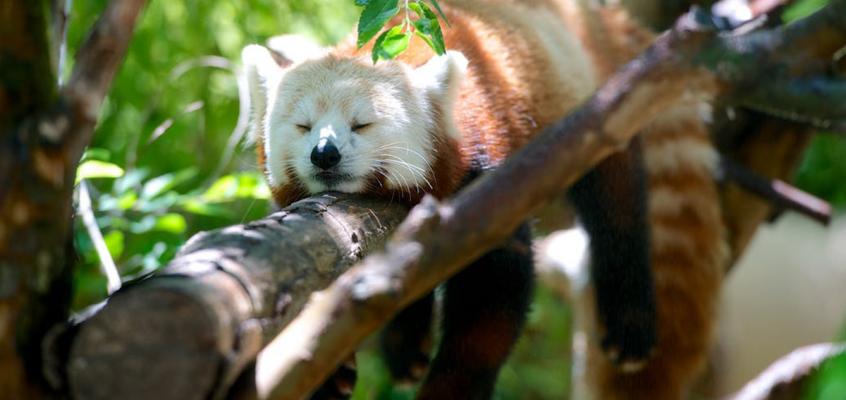 Aprile dolce dormire